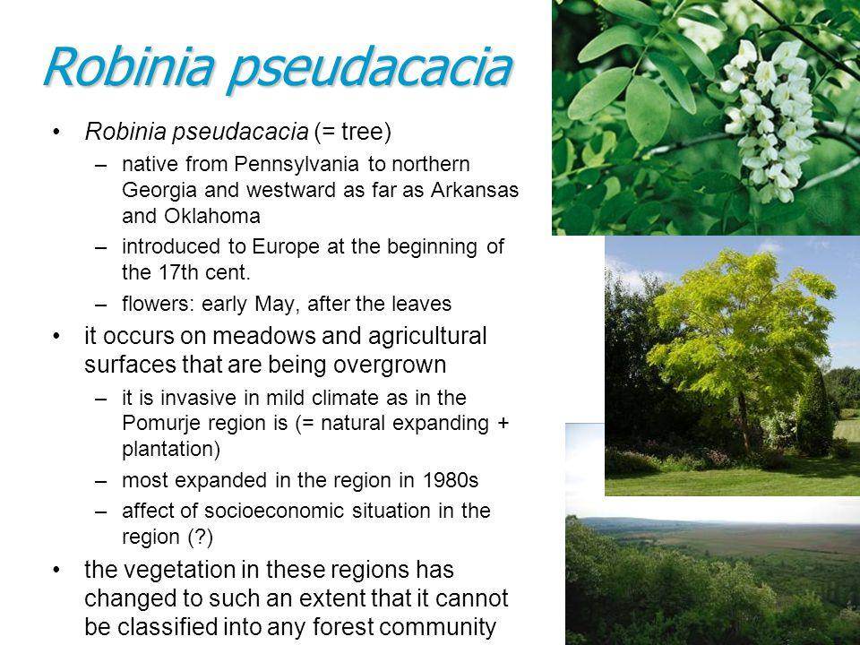 Robinia pseudacacia (= tree) –native from Pennsylvania to northern Georgia and westward as far as Arkansas and Oklahoma –introduced to Europe at the b