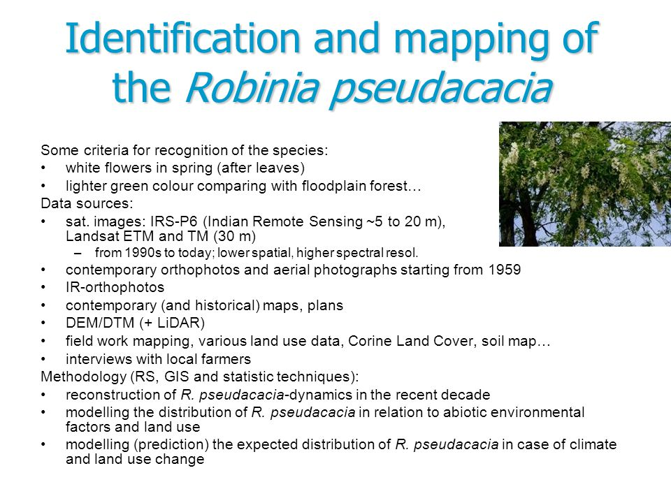 Some criteria for recognition of the species: white flowers in spring (after leaves) lighter green colour comparing with floodplain forest… Data sourc