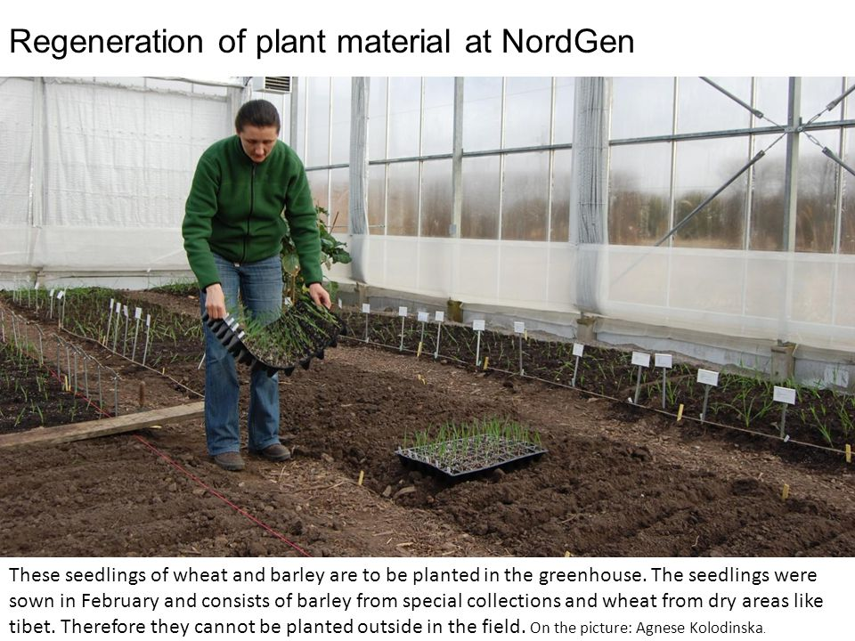 In the greenhouse optimal conditions can be created.