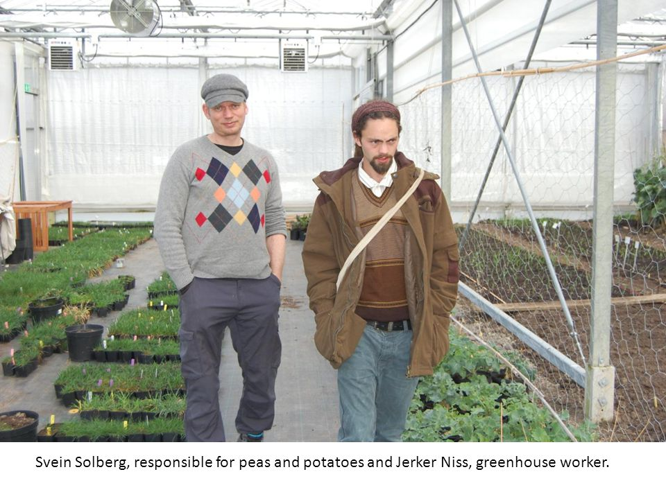 Svein Solberg, responsible for peas and potatoes and Jerker Niss, greenhouse worker.