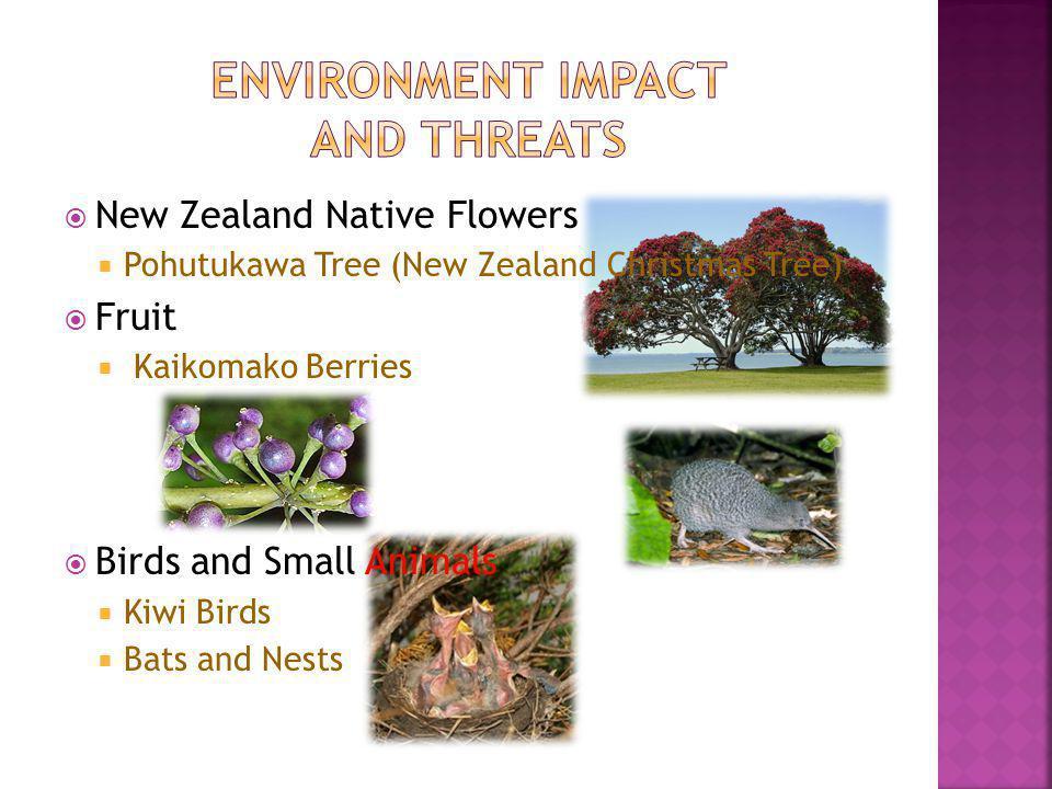 New Zealand Native Flowers Pohutukawa Tree (New Zealand Christmas Tree) Fruit Kaikomako Berries Birds and Small Animals Kiwi Birds Bats and Nests
