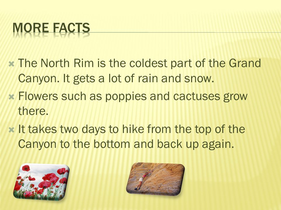 The North Rim is the coldest part of the Grand Canyon. It gets a lot of rain and snow. Flowers such as poppies and cactuses grow there. It takes two d