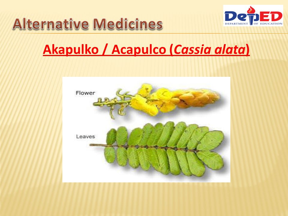Akapulko / Acapulco (Cassia alata) Benefits & Treatment of Akapulko: External Use: Treatment of skin diseases: Tinea infections, insect bites, ringworms, eczema, scabies and itchiness.