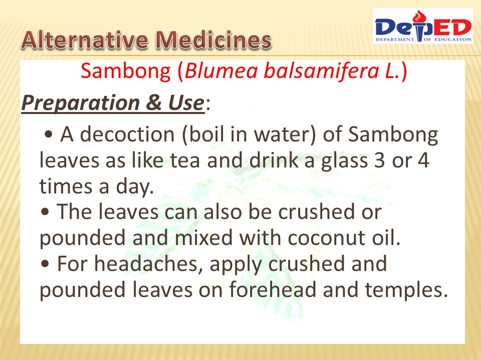 Sambong (Blumea balsamifera L.) Preparation & Use: A decoction (boil in water) of Sambong leaves as like tea and drink a glass 3 or 4 times a day. The