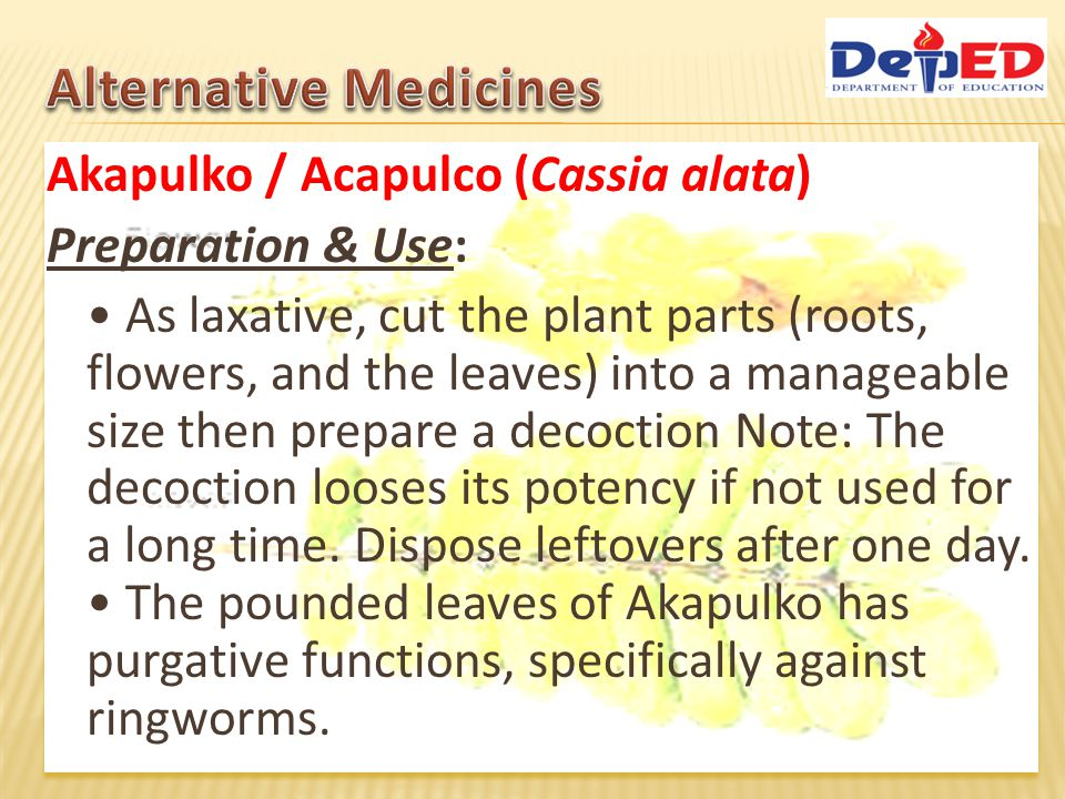 Akapulko / Acapulco (Cassia alata) Preparation & Use: As laxative, cut the plant parts (roots, flowers, and the leaves) into a manageable size then pr
