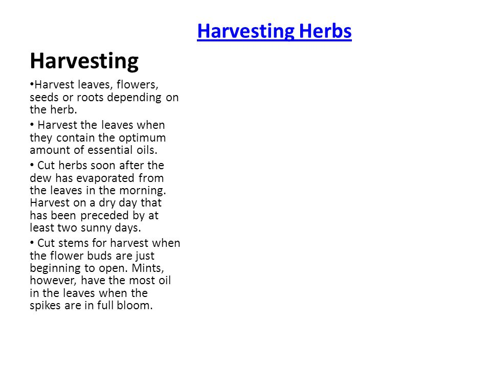 Harvest leaves, flowers, seeds or roots depending on the herb.