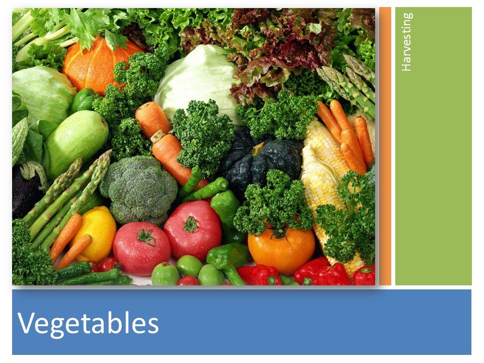 Vegetables Harvesting