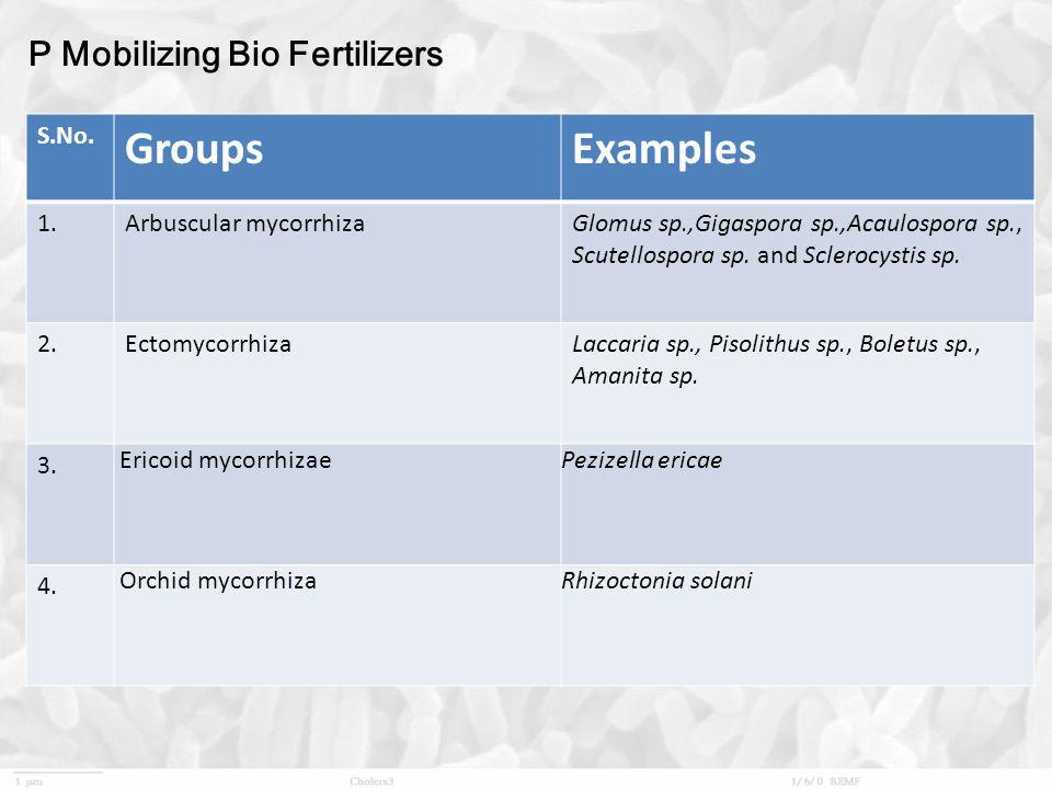 P Mobilizing Bio Fertilizers S.No.