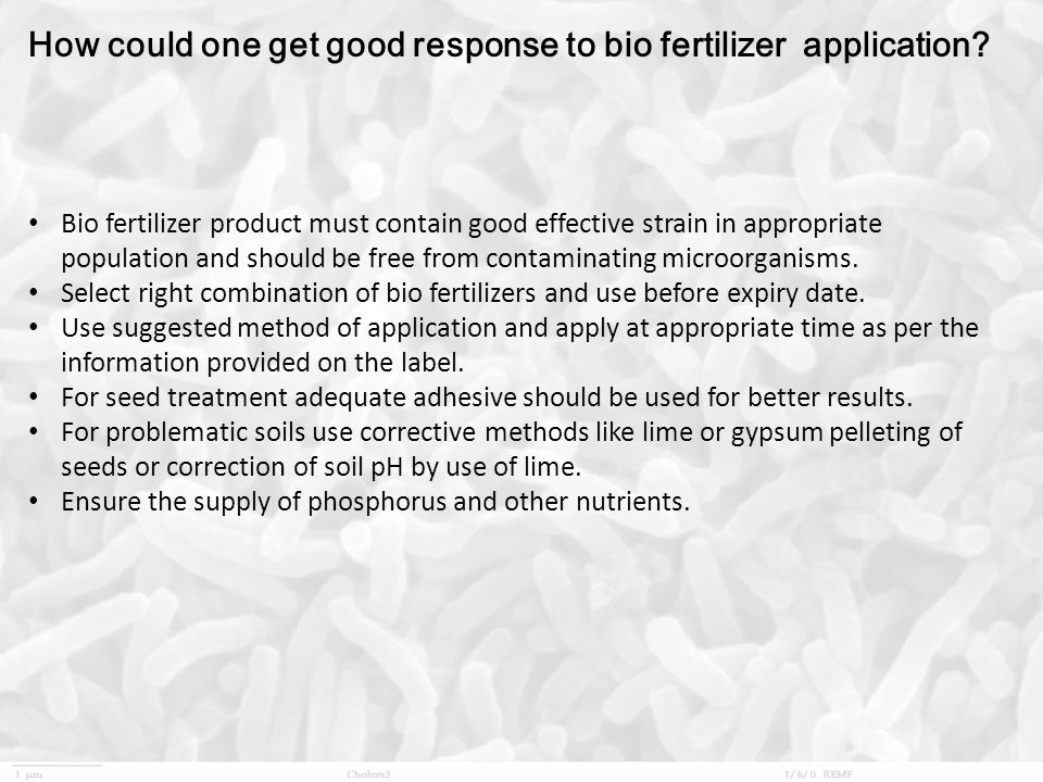 How could one get good response to bio fertilizer application? Bio fertilizer product must contain good effective strain in appropriate population and