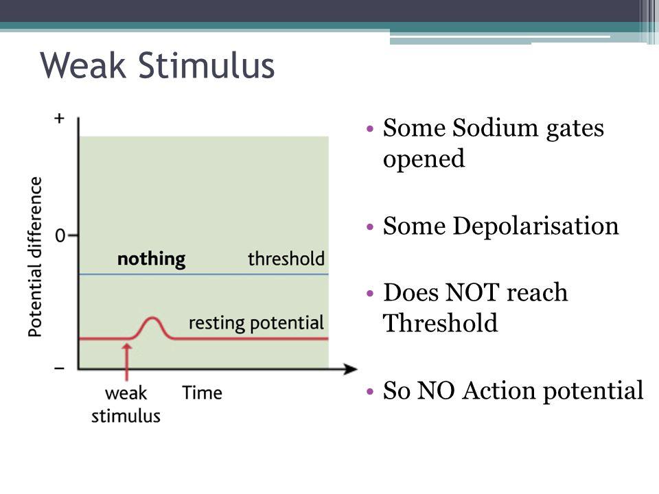 Weak Stimulus Some Sodium gates opened Some Depolarisation Does NOT reach Threshold So NO Action potential
