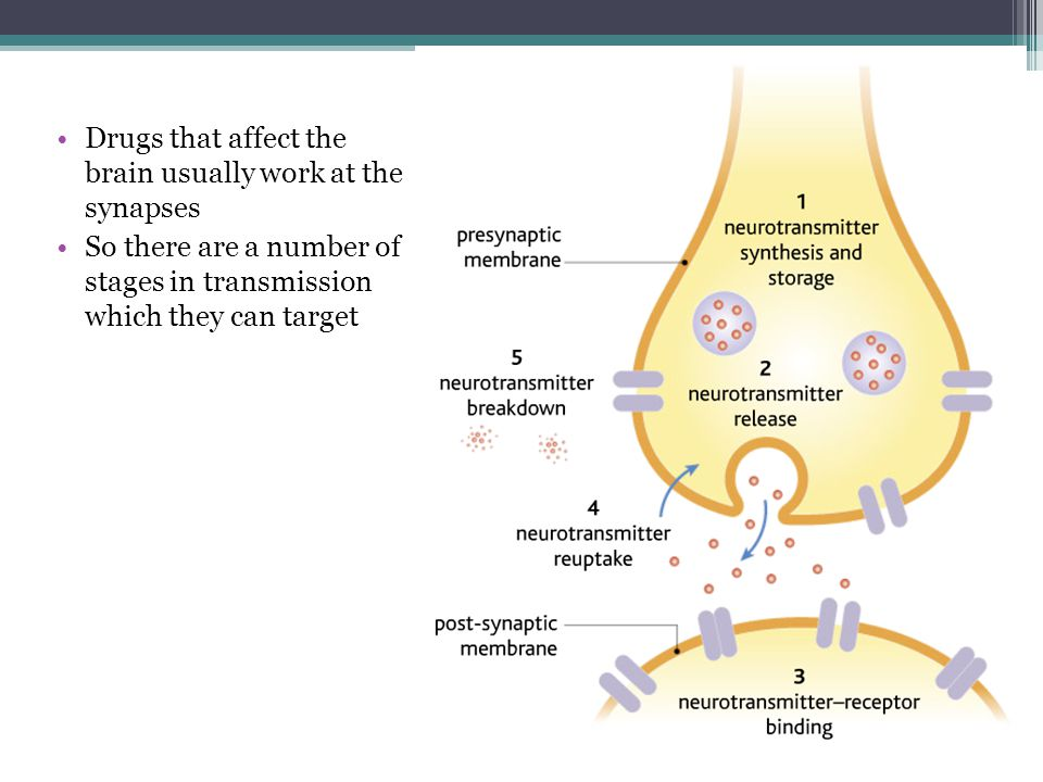 Drugs that affect the brain usually work at the synapses So there are a number of stages in transmission which they can target