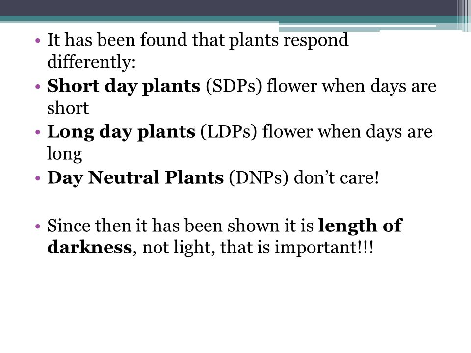 It has been found that plants respond differently: Short day plants (SDPs) flower when days are short Long day plants (LDPs) flower when days are long