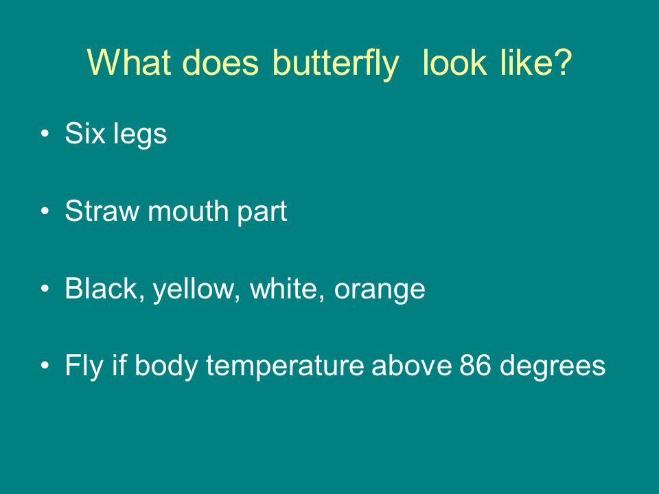 What does butterfly look like? Six legs Straw mouth part Black, yellow, white, orange Fly if body temperature above 86 degrees