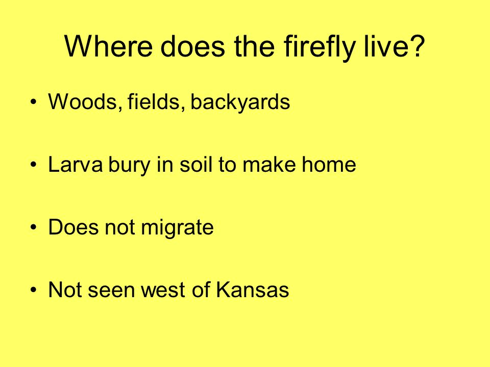 Where does the firefly live? Woods, fields, backyards Larva bury in soil to make home Does not migrate Not seen west of Kansas