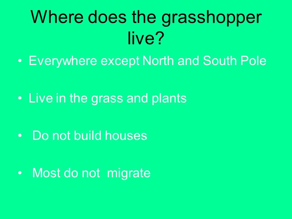 Where does the grasshopper live? Everywhere except North and South Pole Live in the grass and plants Do not build houses Most do not migrate