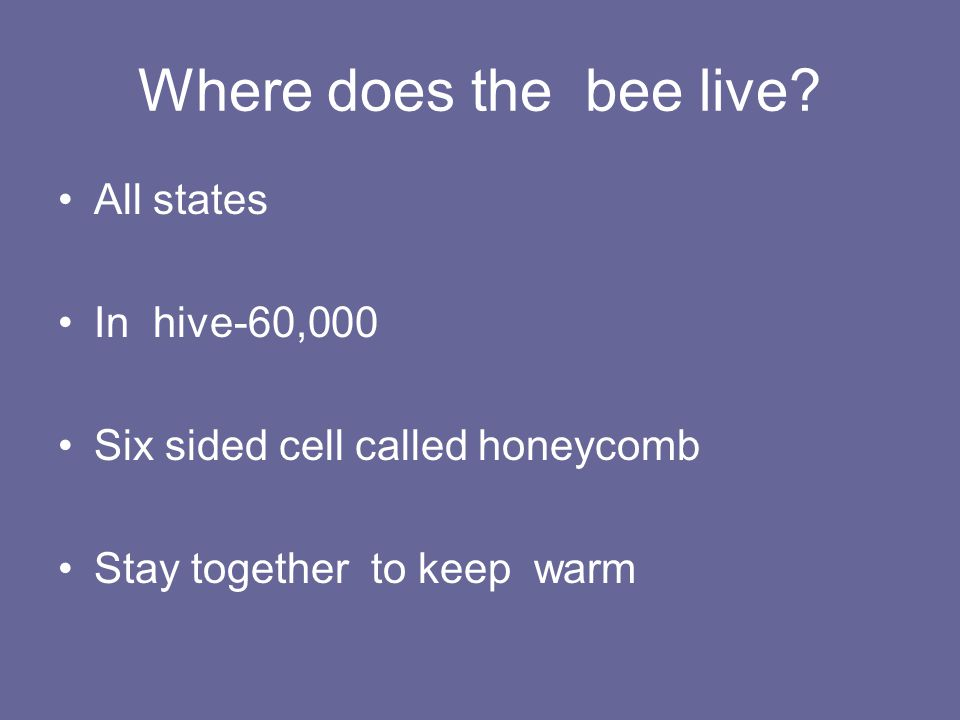 Where does the bee live? All states In hive-60,000 Six sided cell called honeycomb Stay together to keep warm