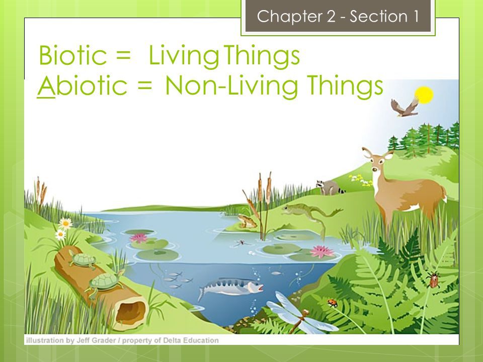 Biotic = Abiotic = Chapter 2 - Section 1 Living Things Non-Living Things