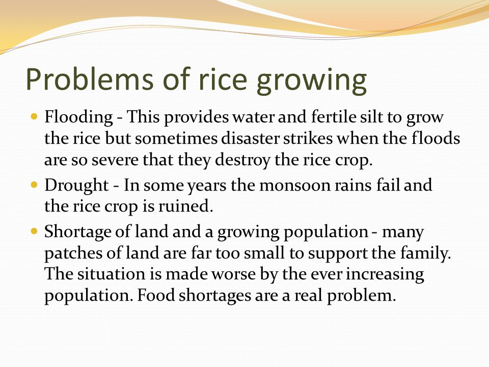 Problems of rice growing Flooding - This provides water and fertile silt to grow the rice but sometimes disaster strikes when the floods are so severe