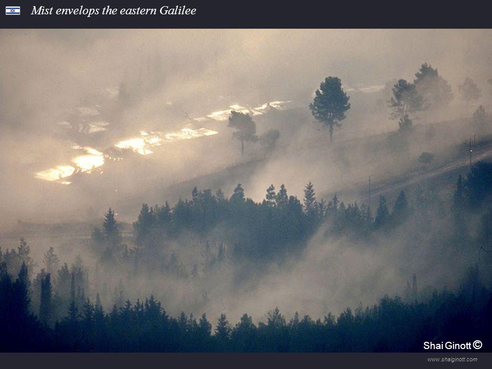 www.shaiginott.com Hanita Forest Shai Ginott ©