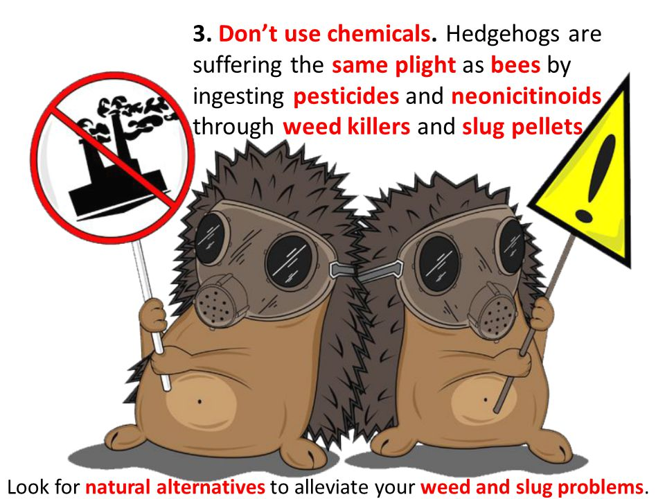 3. Dont use chemicals. Hedgehogs are suffering the same plight as bees by ingesting pesticides and neonicitinoids through weed killers and slug pellet