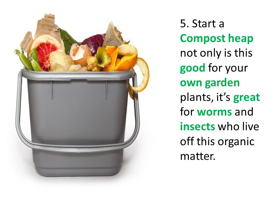 5. Start a Compost heap not only is this good for your own garden plants, its great for worms and insects who live off this organic matter.