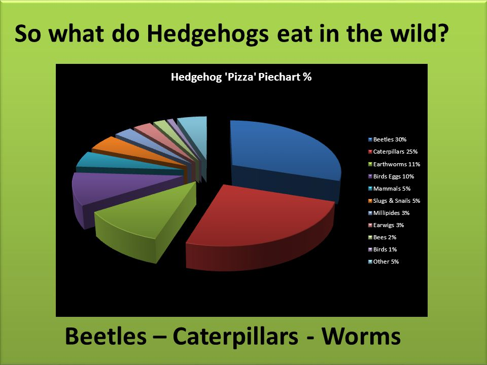 So what do Hedgehogs eat in the wild? Beetles – Caterpillars - Worms