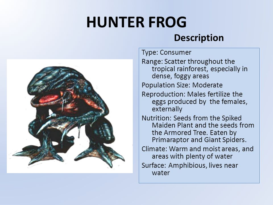HUNTER FROG Type: Consumer Range: Scatter throughout the tropical rainforest, especially in dense, foggy areas Population Size: Moderate Reproduction: