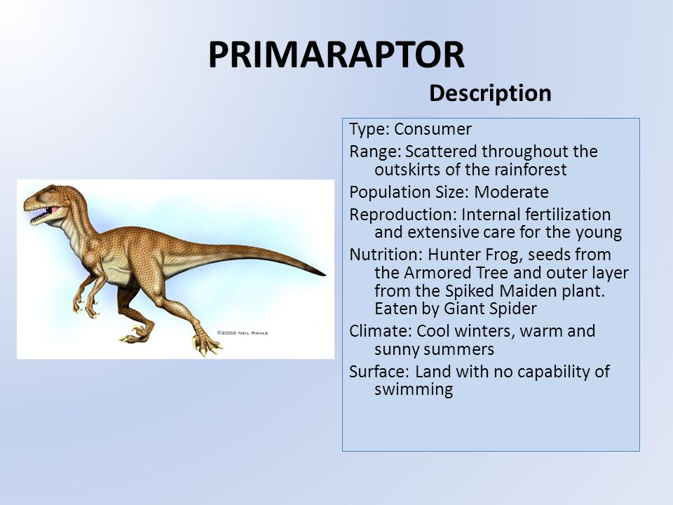 PRIMARAPTOR Type: Consumer Range: Scattered throughout the outskirts of the rainforest Population Size: Moderate Reproduction: Internal fertilization and extensive care for the young Nutrition: Hunter Frog, seeds from the Armored Tree and outer layer from the Spiked Maiden plant.