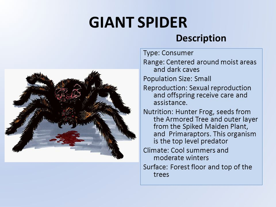 GIANT SPIDER Type: Consumer Range: Centered around moist areas and dark caves Population Size: Small Reproduction: Sexual reproduction and offspring receive care and assistance.
