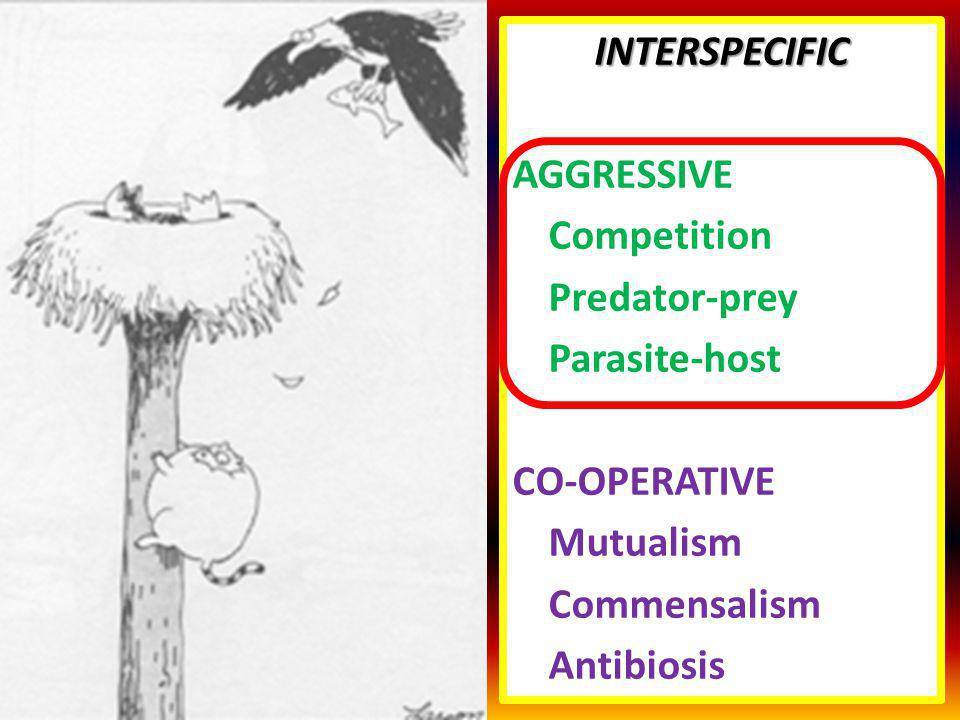 INTERSPECIFIC AGGRESSIVE Competition Predator-prey Parasite-host CO-OPERATIVE Mutualism Commensalism Antibiosis