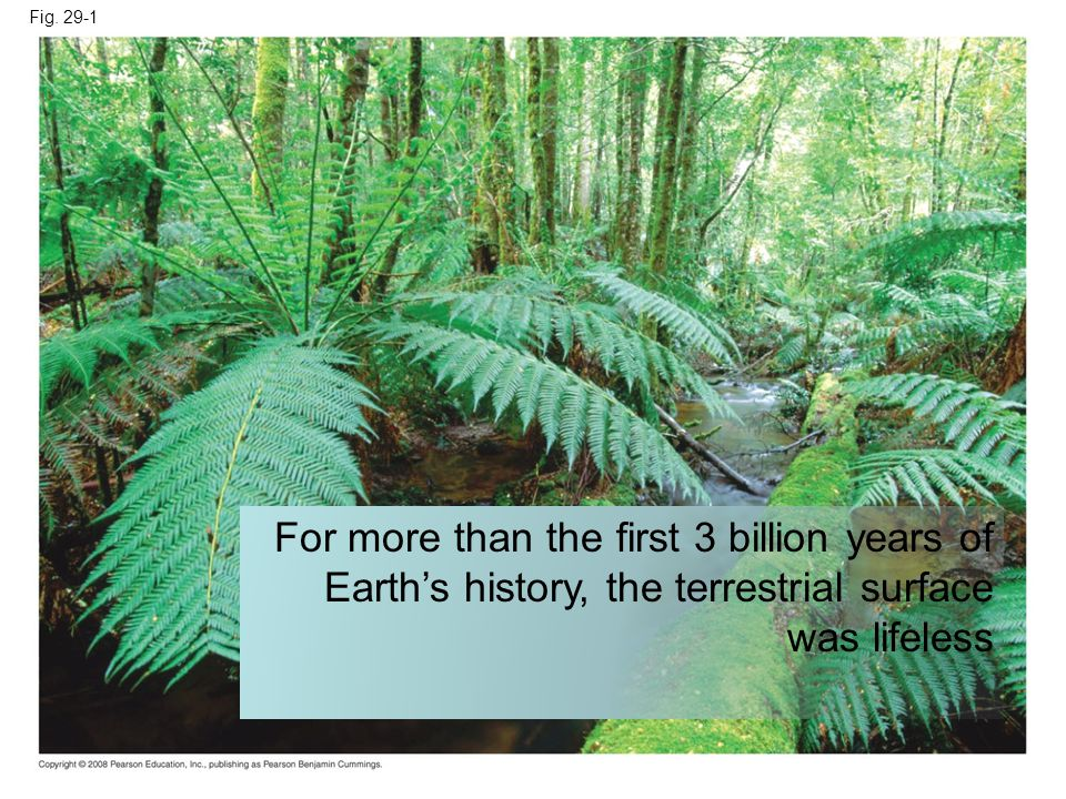 Fig. 29-1 For more than the first 3 billion years of Earths history, the terrestrial surface was lifeless
