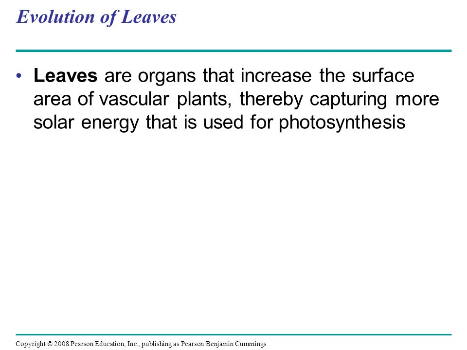 Copyright © 2008 Pearson Education, Inc., publishing as Pearson Benjamin Cummings Evolution of Leaves Leaves are organs that increase the surface area
