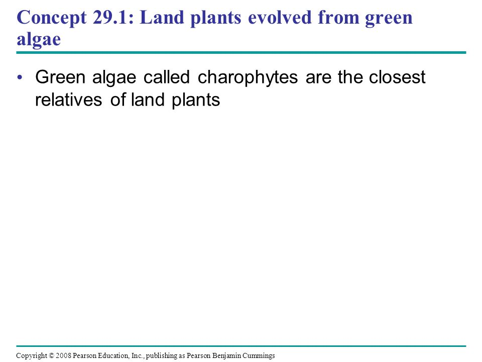 Copyright © 2008 Pearson Education, Inc., publishing as Pearson Benjamin Cummings Concept 29.1: Land plants evolved from green algae Green algae calle