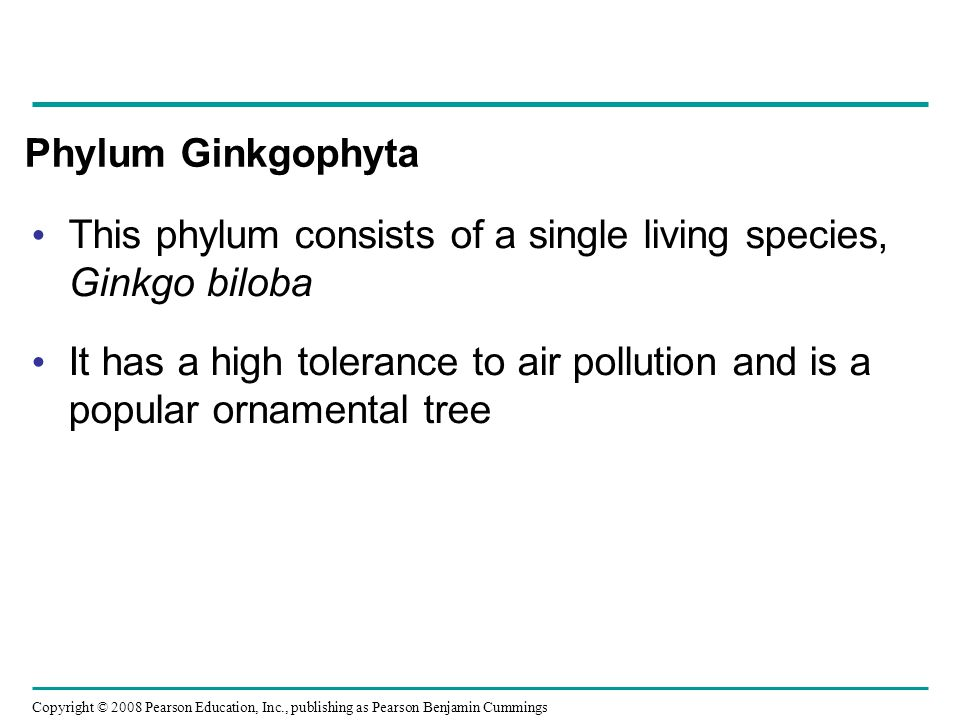 Copyright © 2008 Pearson Education, Inc., publishing as Pearson Benjamin Cummings Phylum Ginkgophyta This phylum consists of a single living species,