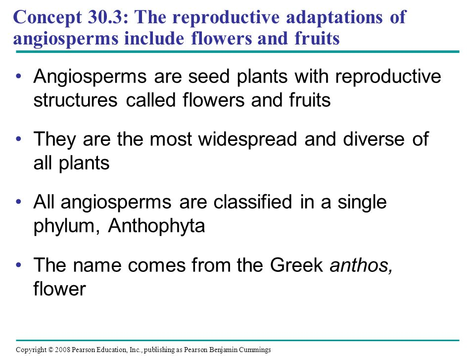 Copyright © 2008 Pearson Education, Inc., publishing as Pearson Benjamin Cummings Concept 30.3: The reproductive adaptations of angiosperms include fl