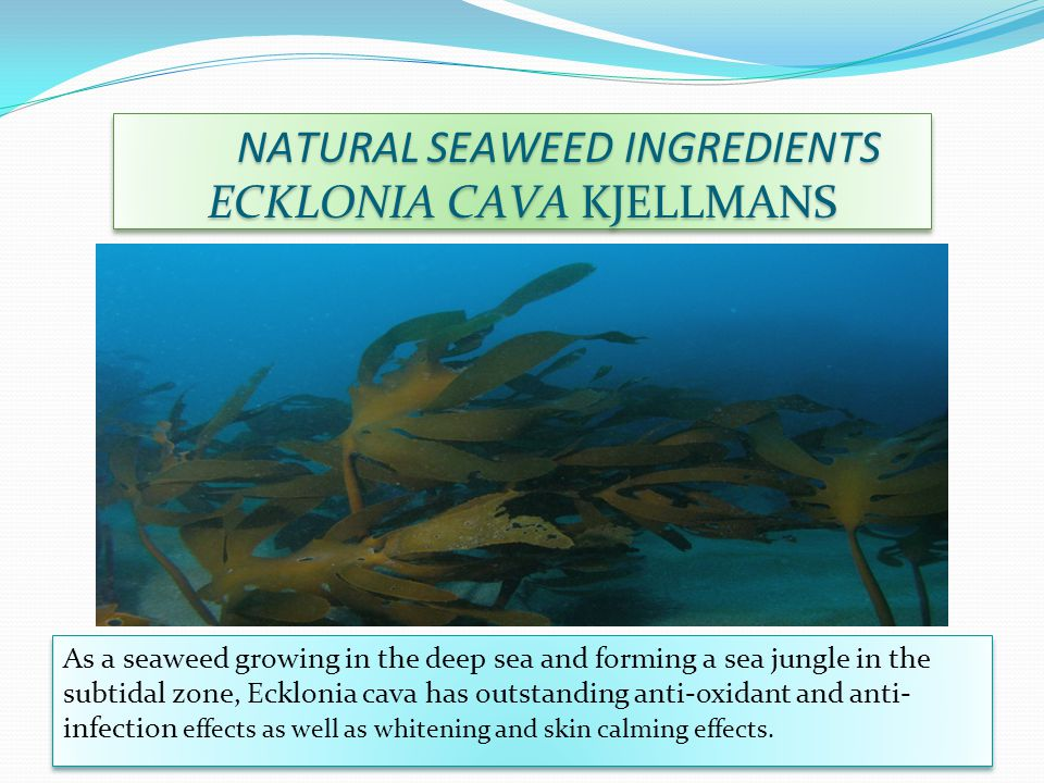 NATURAL SEAWEED INGREDIENTS NATURAL SEAWEED INGREDIENTS Dictyota dichotoma (Hudson) Lamourorux As a seaweed dominant in April - June on the Jeju seashore, it contains dictyol alleviating infection and inflammation of acne skin.