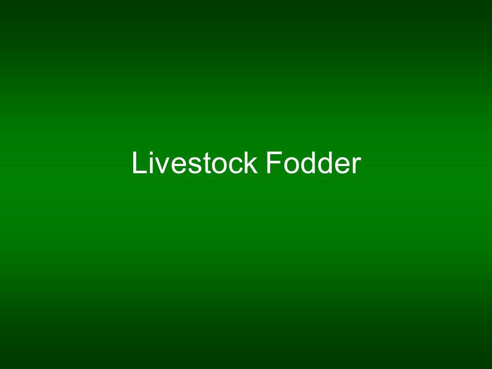 Livestock Fodder