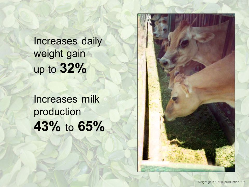 Increases daily weight gain up to 32% Increases milk production 43% to 65% Weight gain 14, Milk production 15, 16