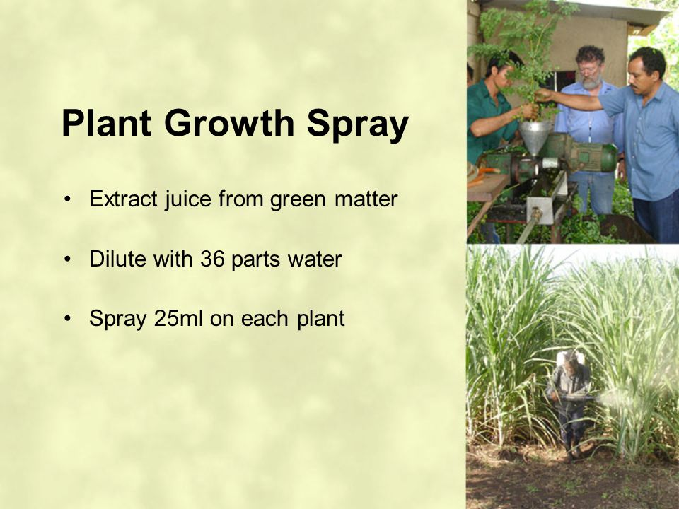 Plant Growth Spray Extract juice from green matter Dilute with 36 parts water Spray 25ml on each plant