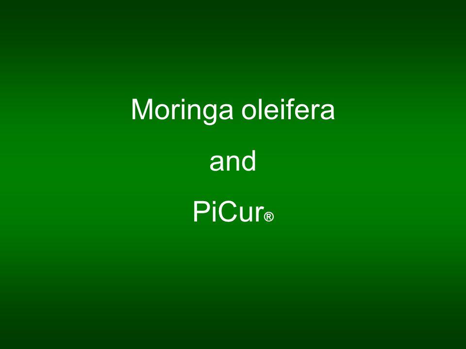 Moringa oleifera and PiCur ®