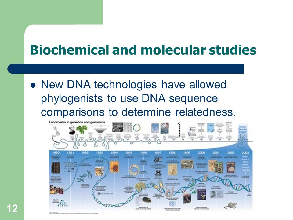 12 Biochemical and molecular studies New DNA technologies have allowed phylogenists to use DNA sequence comparisons to determine relatedness.