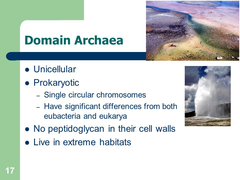 17 Domain Archaea Unicellular Prokaryotic – Single circular chromosomes – Have significant differences from both eubacteria and eukarya No peptidoglyc