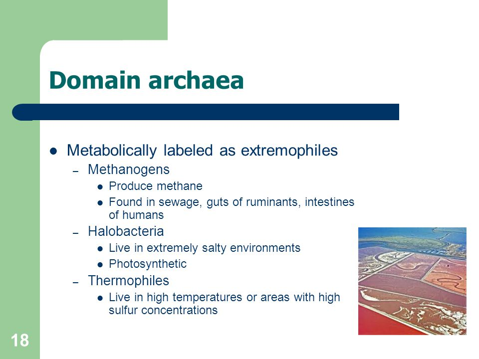 18 Domain archaea Metabolically labeled as extremophiles – Methanogens Produce methane Found in sewage, guts of ruminants, intestines of humans – Halo