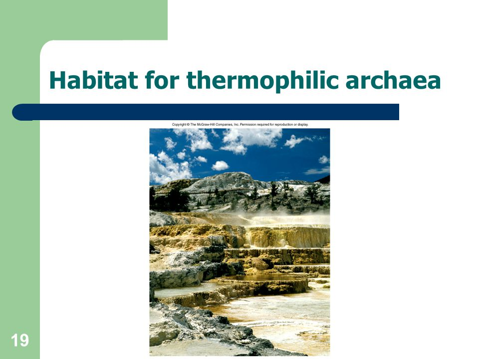 19 Habitat for thermophilic archaea