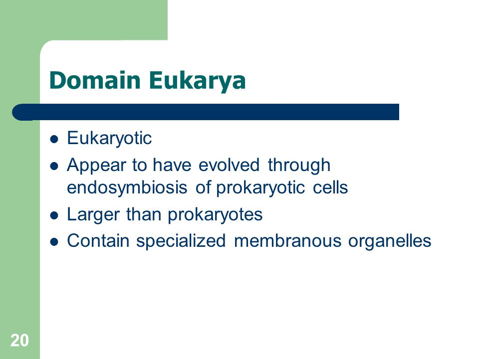 20 Domain Eukarya Eukaryotic Appear to have evolved through endosymbiosis of prokaryotic cells Larger than prokaryotes Contain specialized membranous