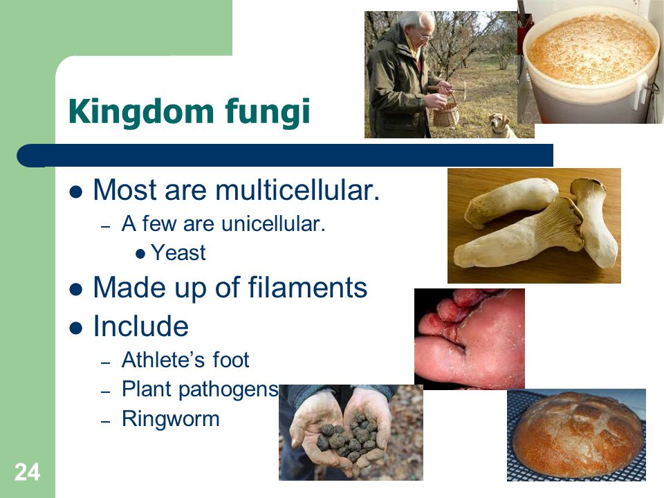24 Kingdom fungi Most are multicellular. – A few are unicellular. Yeast Made up of filaments Include – Athletes foot – Plant pathogens – Ringworm
