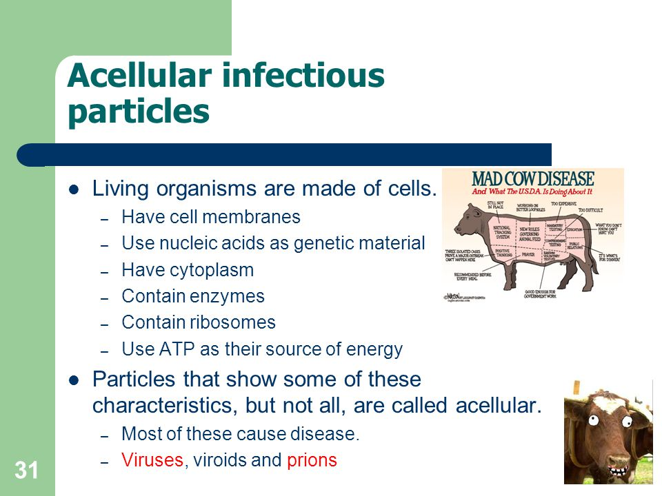 31 Acellular infectious particles Living organisms are made of cells. – Have cell membranes – Use nucleic acids as genetic material – Have cytoplasm –