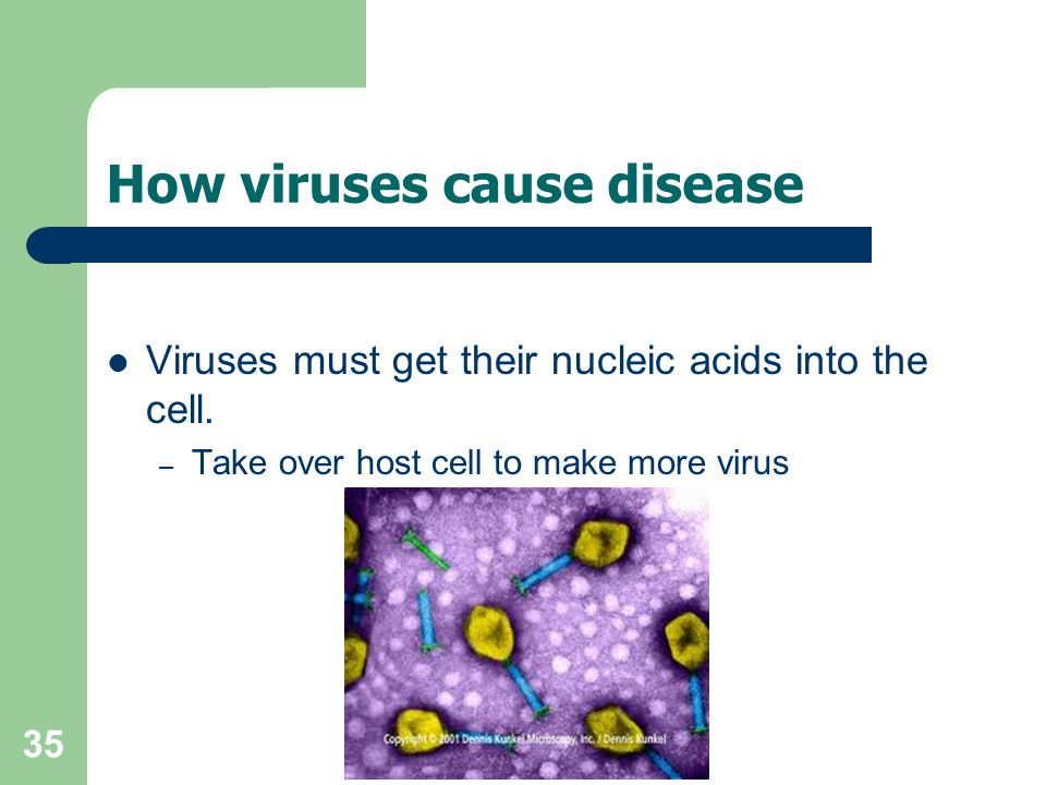 35 How viruses cause disease Viruses must get their nucleic acids into the cell. – Take over host cell to make more virus