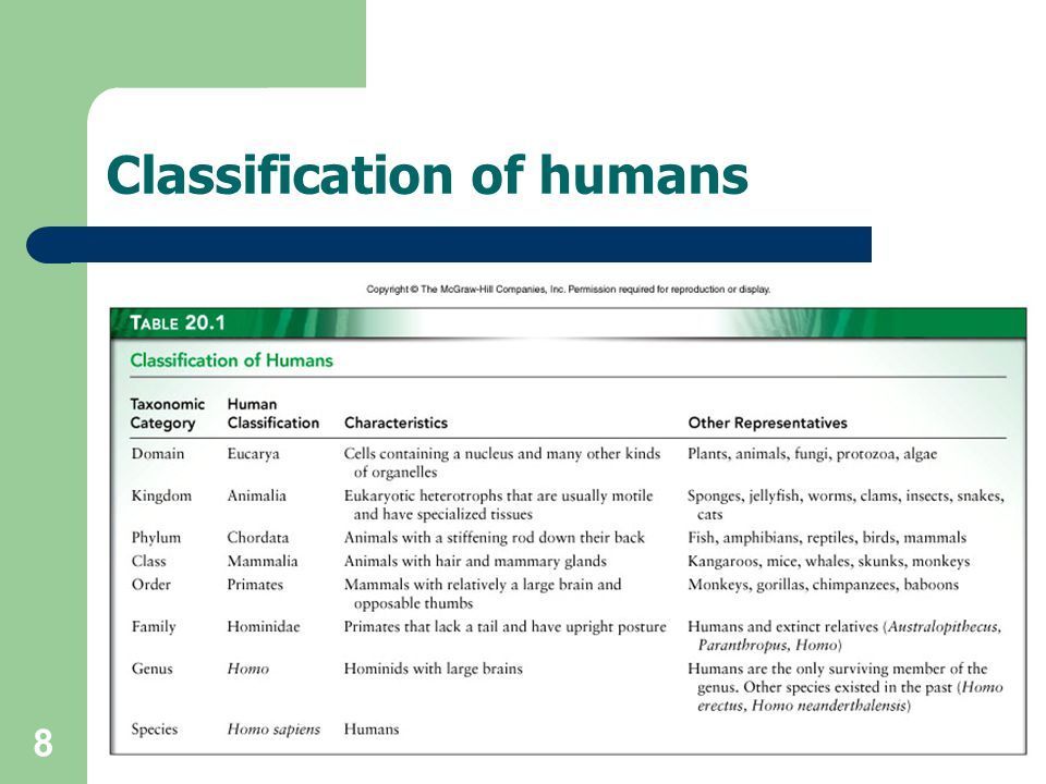 8 Classification of humans