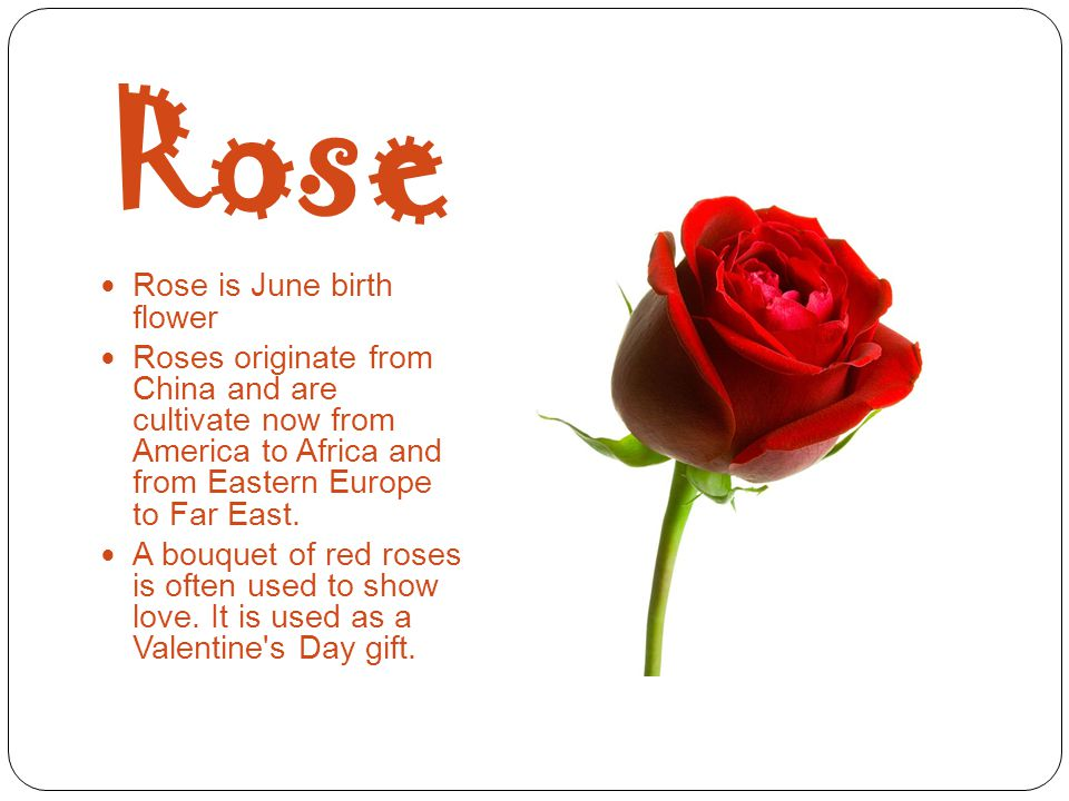 Rose Rose is June birth flower Roses originate from China and are cultivate now from America to Africa and from Eastern Europe to Far East. A bouquet